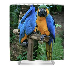 Colourful Macaw Pohakumoa Maui Hawaii Shower Curtain by Sharon Mau