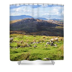 Colourful Undulating Irish Landscape In Kerry With Grazing Sheep Shower Curtain by Semmick Photo