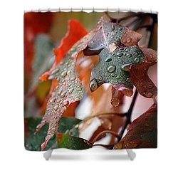 Colours Of Fall I Shower Curtain by Robert Meanor