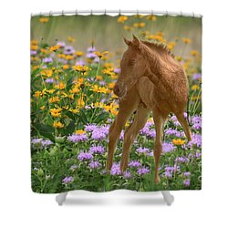 Colt In The Flowers Shower Curtain by Myrna Bradshaw
