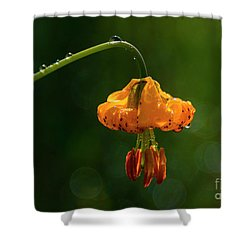 Columbia Lily With Dew Shower Curtain