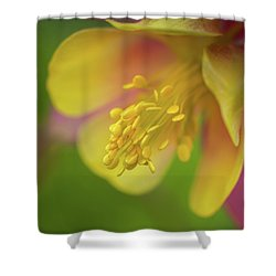 Shower Curtain featuring the photograph Columbine by Greg Nyquist