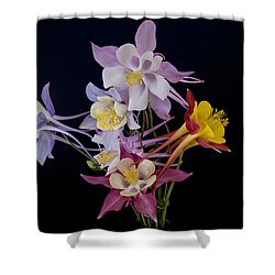 Shower Curtain featuring the photograph Columbine Medley by Gary Lengyel