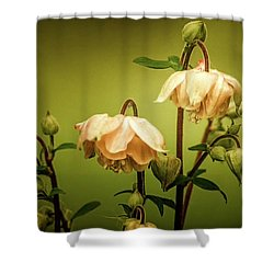 Columbines In Summer Shower Curtain