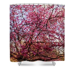 Columnar Sargent Cherry 1 Shower Curtain
