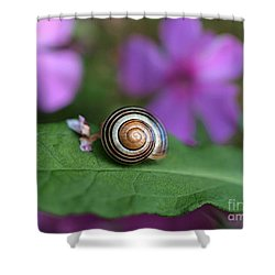 Come Out Of Your Shell Shower Curtain