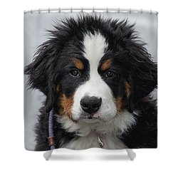 Come Play With Me Shower Curtain