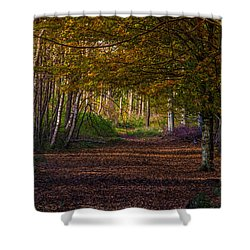 Shower Curtain featuring the photograph Comfort In These Woods by Odd Jeppesen
