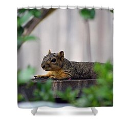 Comfortable  Shower Curtain