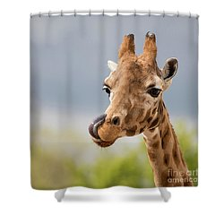 Comical Giraffe With His Tongue Out.  Shower Curtain