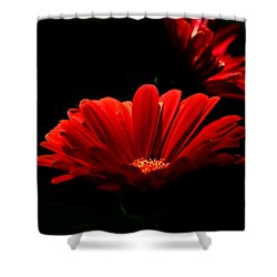 Coming In To The Light Shower Curtain by Sheila Brown