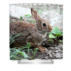 Shower Curtain featuring the photograph Coming Out Of Hiding by Sheila Brown