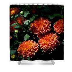 Coming Out Of The Shadows Shower Curtain