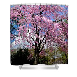 Coming To Life Shower Curtain by Frozen in Time Fine Art Photography