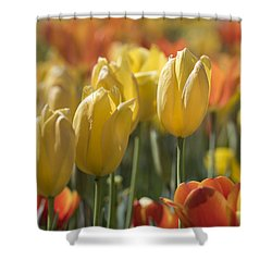 Coming Up Tulips Shower Curtain
