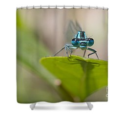 Common Blue Damselfly Shower Curtain
