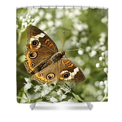 Common Buckeye Butterfly On White Thoroughwort Wildflowers Shower Curtain