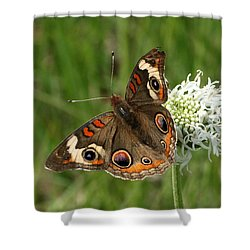 Common Buckeye Butterfly On Wildflower Shower Curtain by Sheila Brown