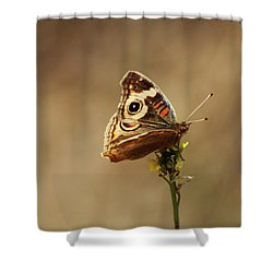 Common Buckeye Shower Curtain