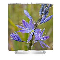Common Camas Shower Curtain by Sean Griffin