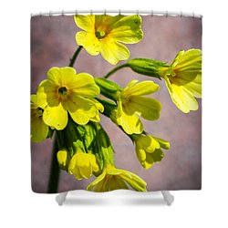 Common Cowslip In The Morning Sunlight Shower Curtain