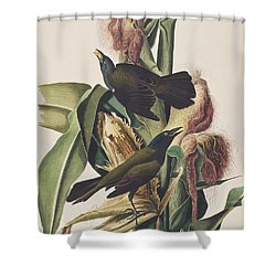 Common Crow Shower Curtain by John James Audubon