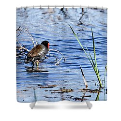 Shower Curtain featuring the photograph Common Gallinule by Gary Wightman
