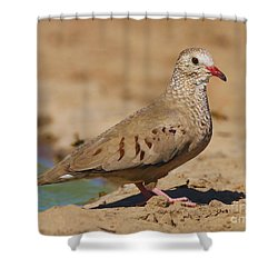 Shower Curtain featuring the photograph Common Ground-dove by Myrna Bradshaw