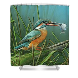 Shower Curtain featuring the painting Common Kingfisher by Mike Brown