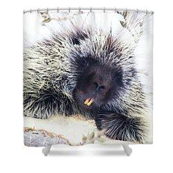 Common Porcupine Shower Curtain