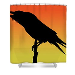 Common Raven Silhouette At Sunset Shower Curtain