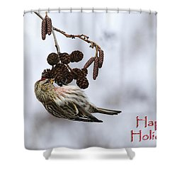 Common Redpoll Christmas Card Shower Curtain by Gary Hall