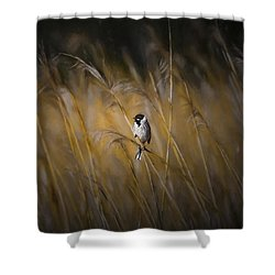 Common Reed Bunting Nov Shower Curtain by Leif Sohlman
