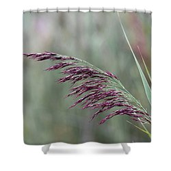Shower Curtain featuring the photograph Common Reed Flower Stalk by Scott Lyons