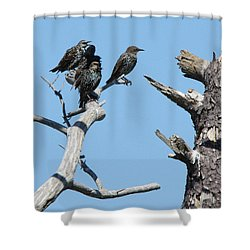Common Starling Shower Curtain