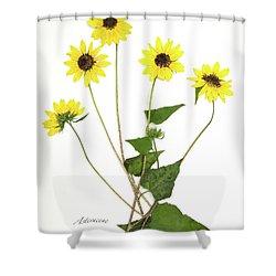 Common Sunflower Shower Curtain