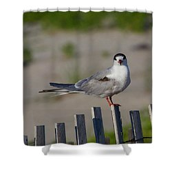 Common Tern Shower Curtain