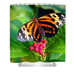 Common Tiger Glassywing Butterfly Shower Curtain