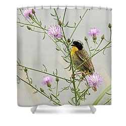 Common Yellowthroat Shower Curtain