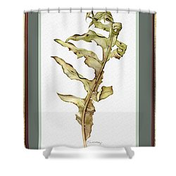 Compass Plant, Fall Shower Curtain by Catherine Twomey