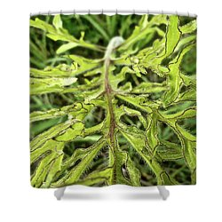 Compass Plant Shower Curtain