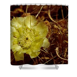 Complementary Colors Shower Curtain by Bob Mintie