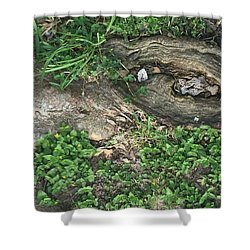 Composition In Trees Shower Curtain