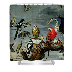 Concert Of Birds Shower Curtain by Frans Snijders