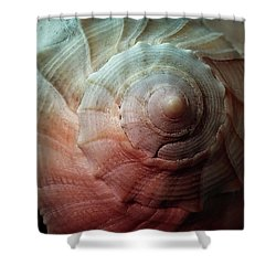 Conch Shower Curtain