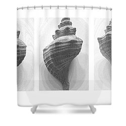 Conch Erotica Shower Curtain by John Bartosik