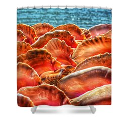 Conch Parade Shower Curtain
