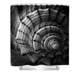 Conch Shell In Black And White Shower Curtain