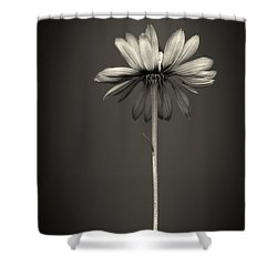 Cone Flower 7 Shower Curtain by Simone Ochrym