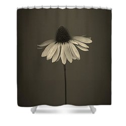 Cone Flower 8 Shower Curtain by Simone Ochrym